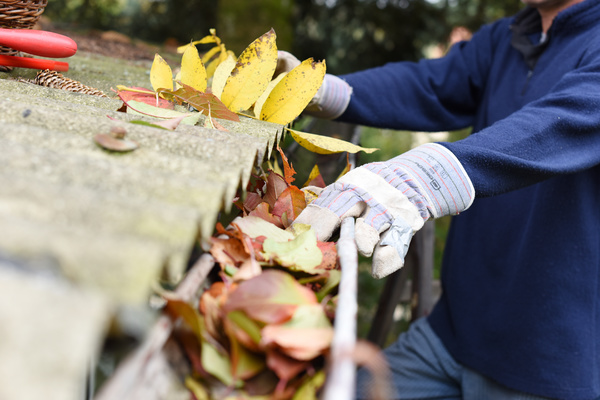Cleaning leaves out of a gutter.