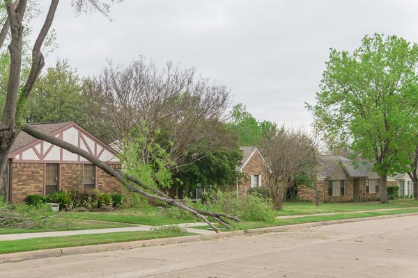 Downed tree in a neighborhood.