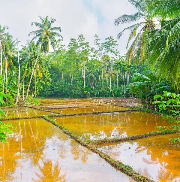 Restoring Your Damaged Landscaping After Rain Or Flooding