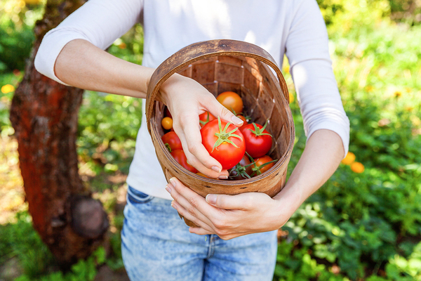 Person holding a basket filled with fresh tomatoes.