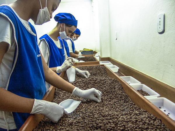 Workers sorting through coffee beans.