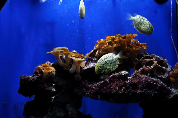 What's the Difference between Oceanography and Marine Biology