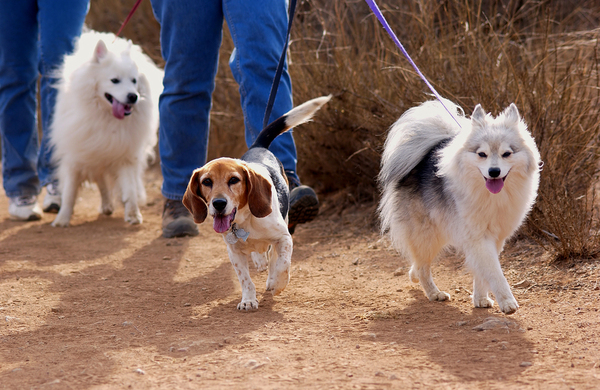 Bigstock Dogs 902818 600x
