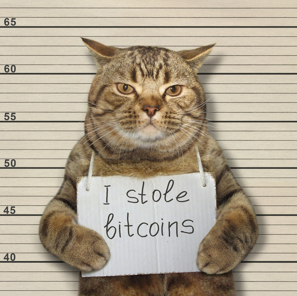 Cat holding a sign reading I stole bitcoins.