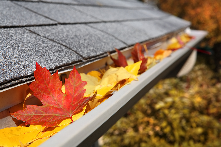 Image result for leaves in gutters