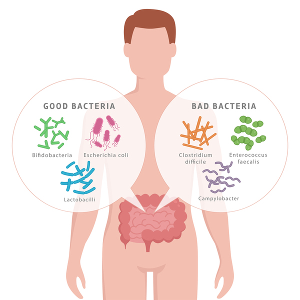 Drawing of man showing good bacteria vs bad bacteria in his bowels.
