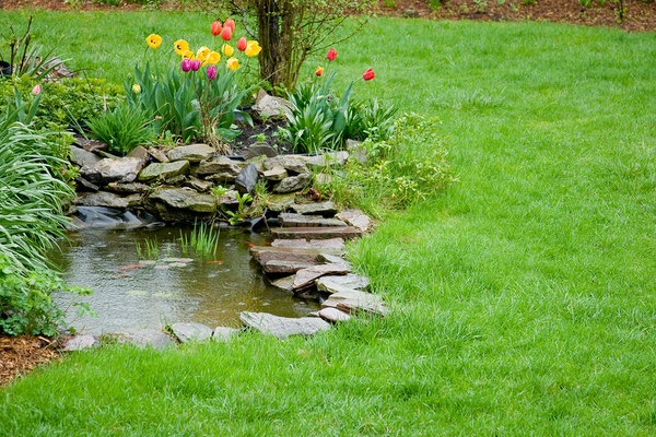 What you need to know to make a backyard pond for Outside pond plants