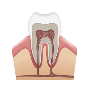 Tooth diagram.