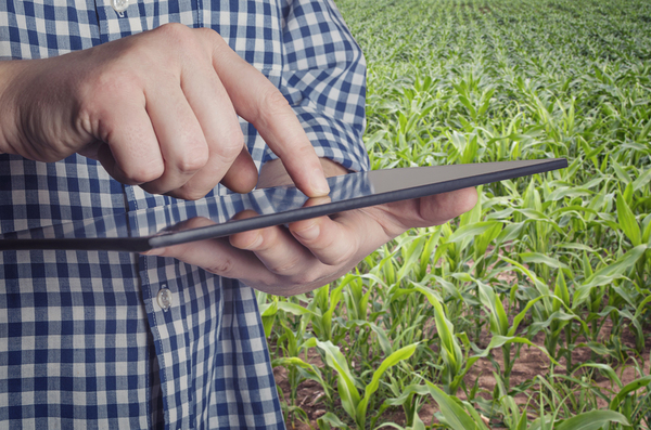 Farmer using a tablet in a field.