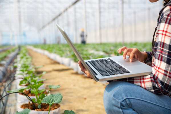 Farmer in a large greenhouse typing on a laptop computer.