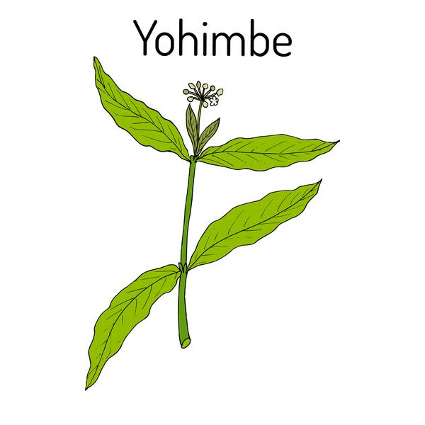 Yohimbe plant.