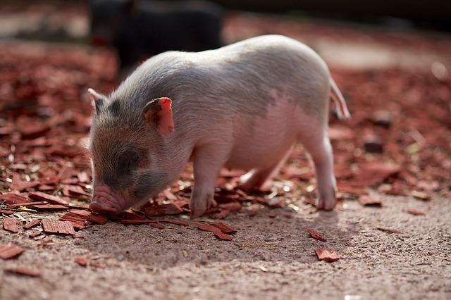 Pig: An Alternative to MapReduce