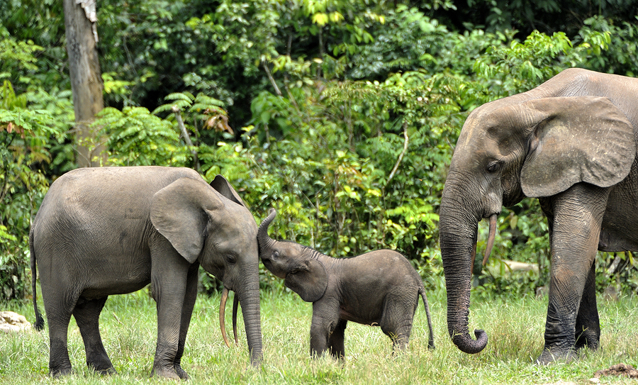 bigstock The Elephant Calf With Eleph 114893240 4 Ways Hadoop & Spark Can Play Nicely Together