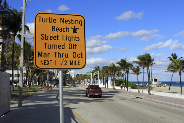 Learn how you can help protect Florida sea turtles.