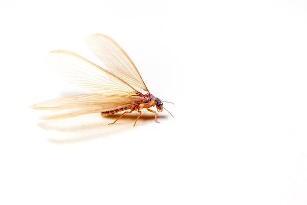 Termites infest